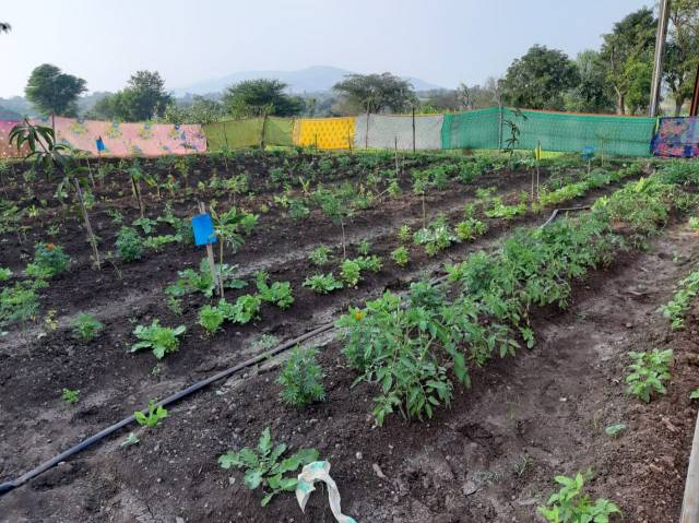 multilayer farming