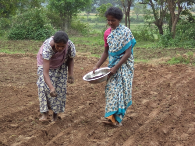 Women engaged in line sowing Toner